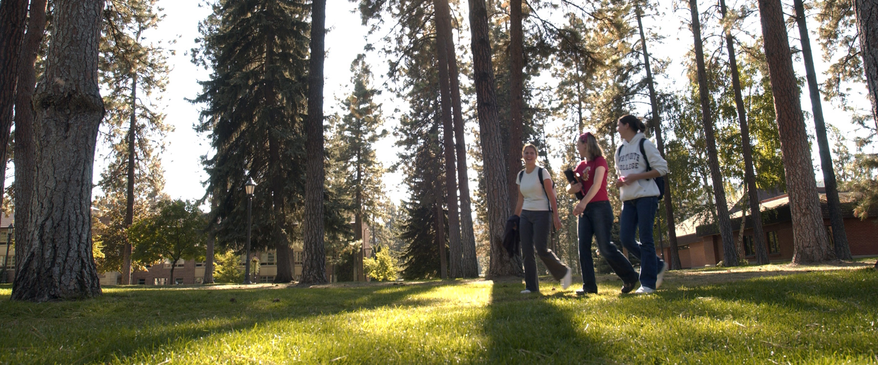 Three female students walk across the grass in the middle of campus. Tall pine trees cast shadows across the grass.