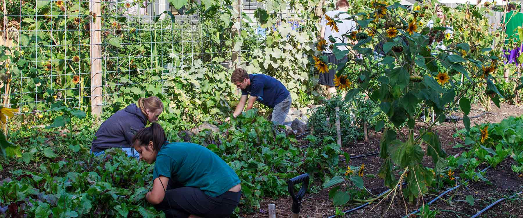 Three students crouch down working amid rows of plants in a garden.