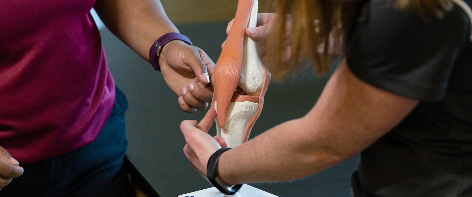 One student holds a functional model of the knee and points to a ligament as another student stands nearby watching.